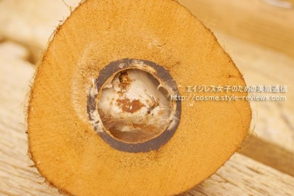 ナイジェリア産の原種ココナッツ