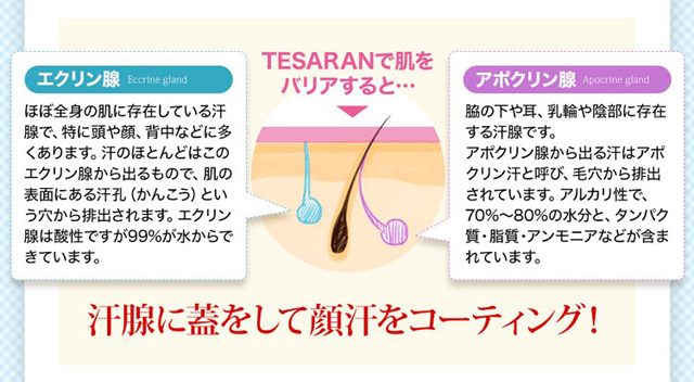 2つの汗腺の違いと顔汗を止める仕組み