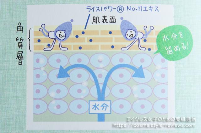 ライスパワーNo.11の保湿力改善効果とは